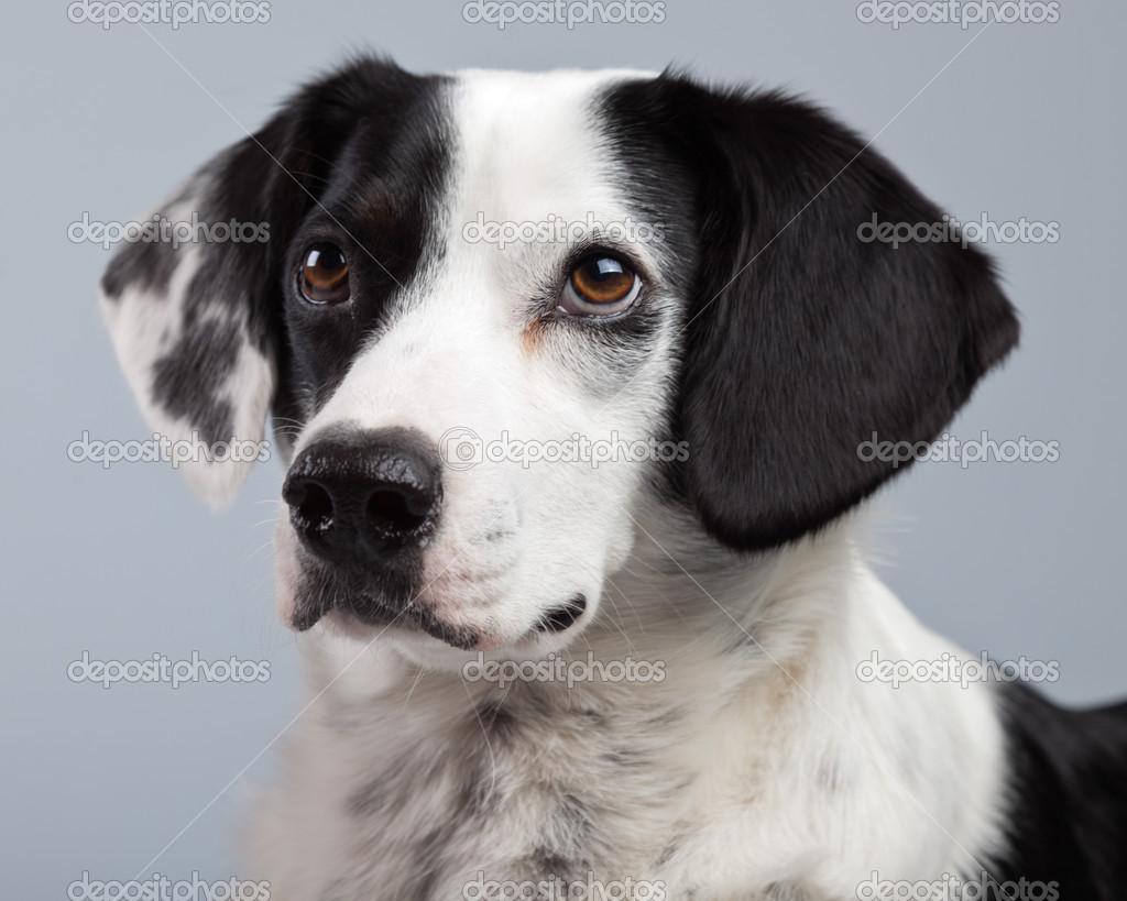 чёрно белые картинки собак