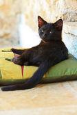 Fotografie Sleepy curious black street kitten on pillow outdoors. Corfu. Gr