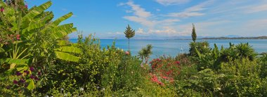Panoramic shot of green paradise garden with flowers near the se