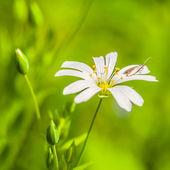 jarní pozadí s kytičkou a krásný bokeh