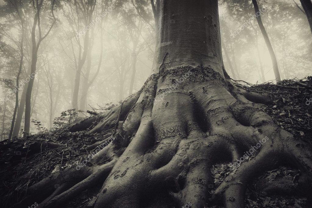 Фотообои Корни старого дерева в темном туманном лесу