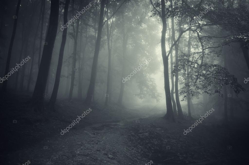 Фотообои Dark forest with road