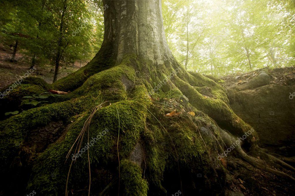 Фотообои Корни дерева с зеленым мхом в зеленом лесу