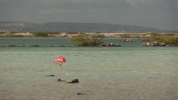 Flamingos on Bonaire, Netherlands Antilles.