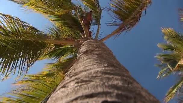 tropická pláž - Palma