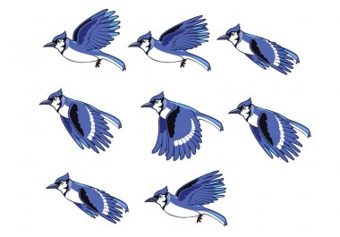 Blue Jay Bird Flying Animation
