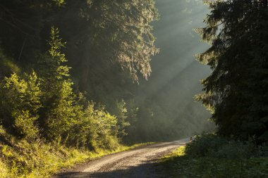 Country road running through the spring deciduous forest at dawn