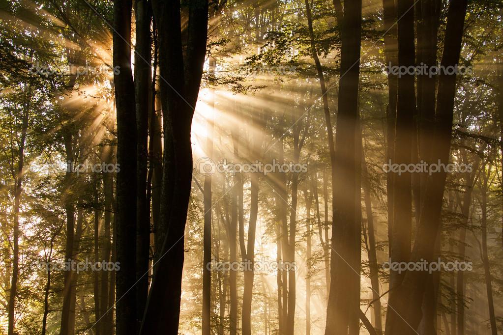 Фотообои autumn forest trees. nature green wood sunlight backgrounds.