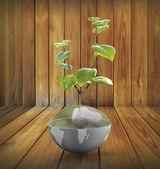 Fényképek zöld növény a földön, a globe