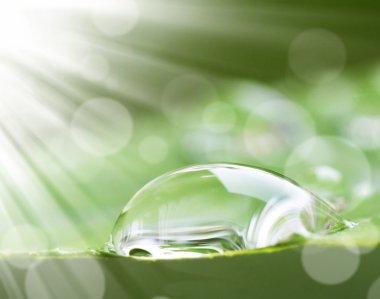 water drop on leaves