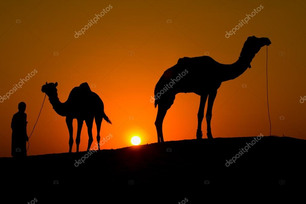 Silhouette of a man and two camels at sunset in the desert