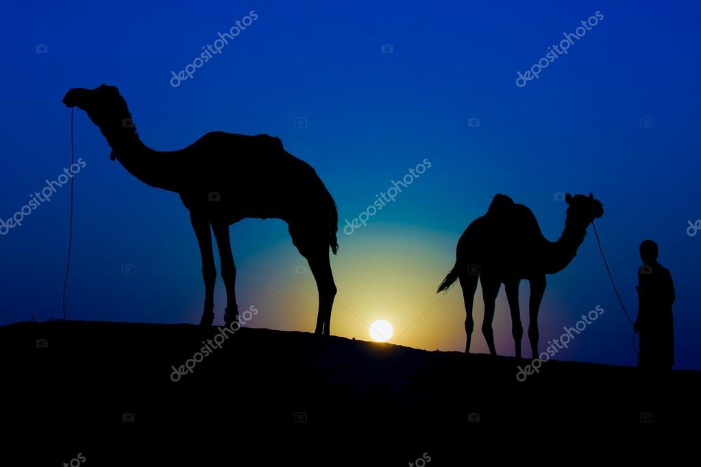 Silhouette of a man and two camels