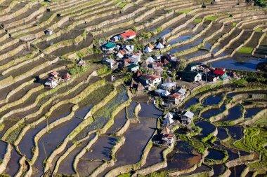 Rice Terraces, Philippine.