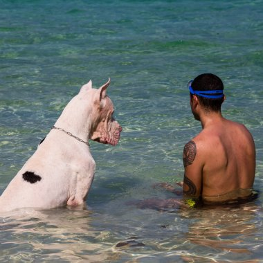 Man with the Great Dane in the sea
