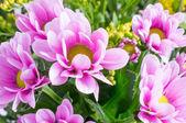 Fotografie Beautiful spring flowers