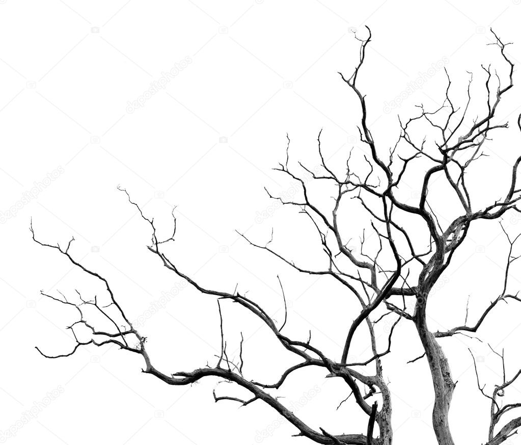 Dead tree background