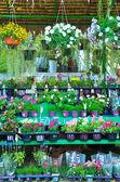 Photo Flowers in flower market