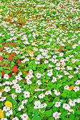 lesní květiny