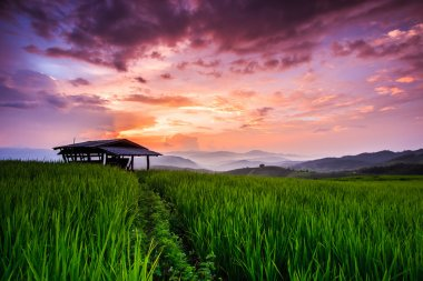 Paddy Green sunset view