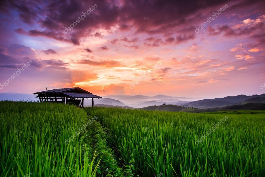 Paddy Green sunset view