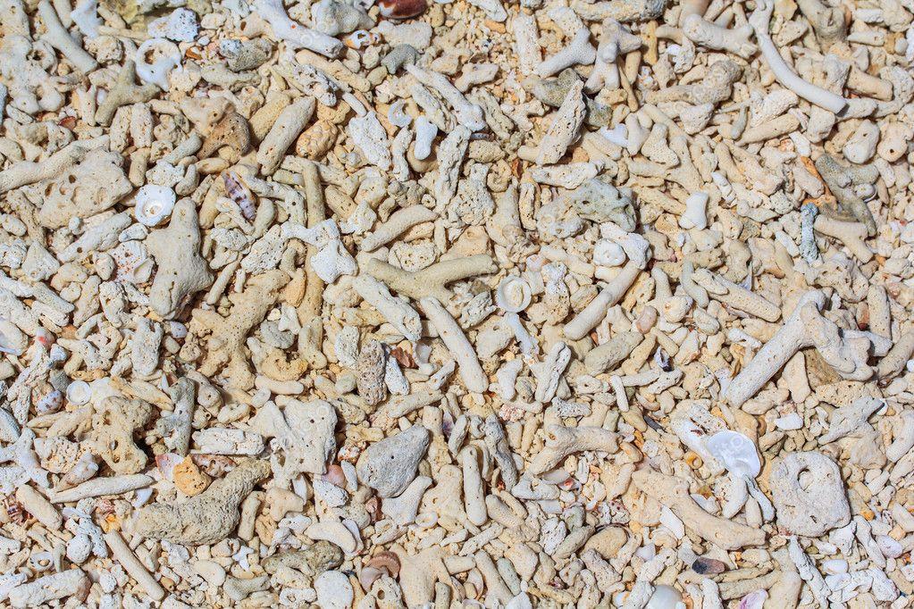 Ocean Shells, Conch Shells, Corals Pieces and Pebbles