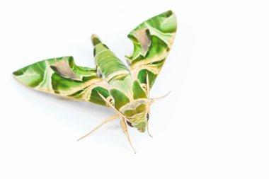 Moth-Guard Month