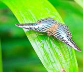 Fotografie motýl v pang sida národním parku