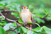 Jungvögel lernen fliegen