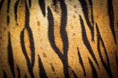 Fotografie Beautiful tiger fur texture