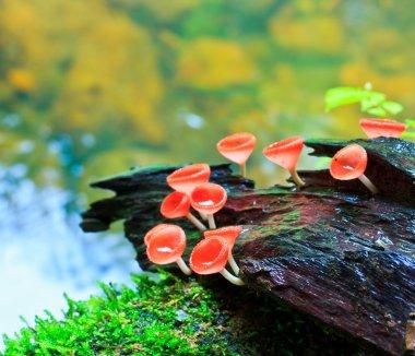 """Картина, постер, плакат, фотообои """"красный гриб ,"""", артикул 38011595"""