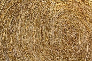 Dry straw background,