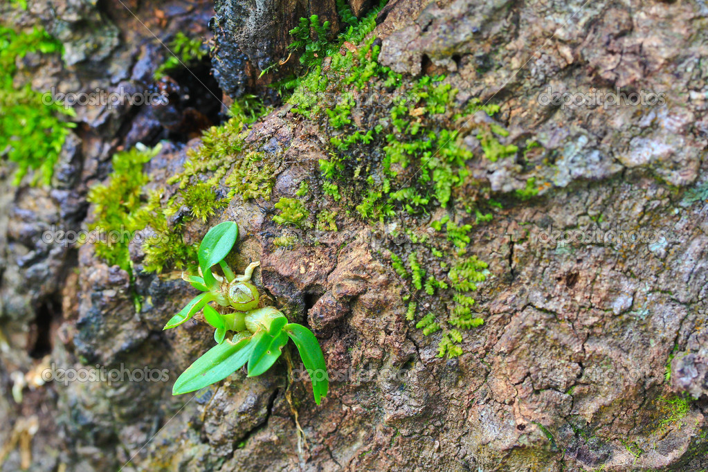 Orchid Moss