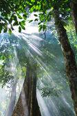 Fotografie přírodní sluneční světlo