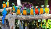 Fotografie barevný papoušek