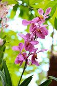 Fotografie Orchids in the garden
