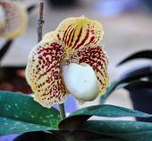 Fotografie Orchid flowers in the garden