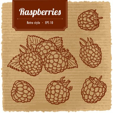 Vector illustration of ripe raspberry. Isolated vector retro style raspberries. Vintage label. Sweet berry. clip art vector