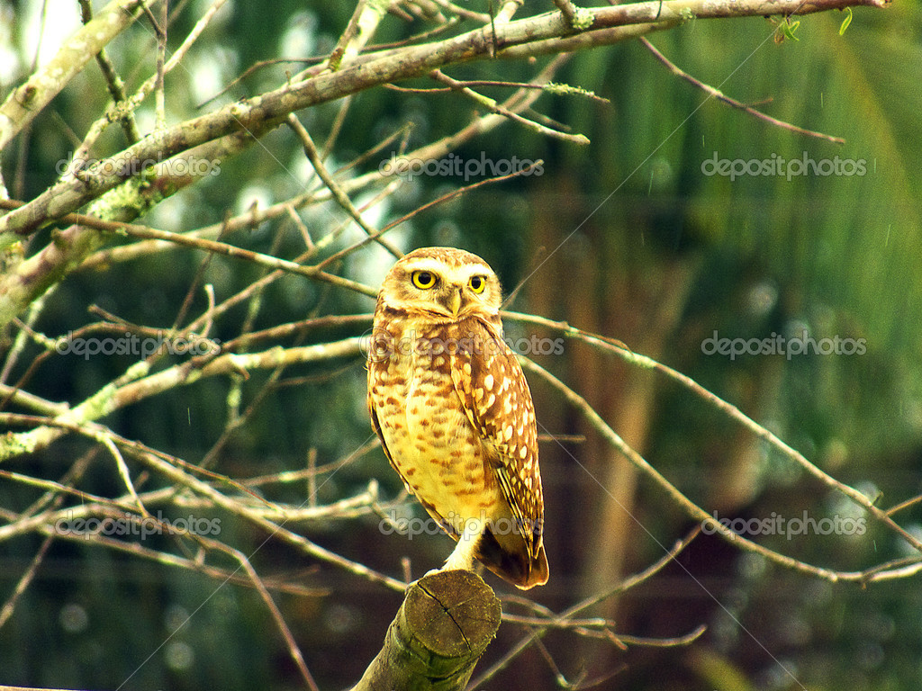 Calendar owl