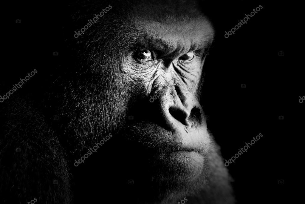 gorilla #hashtag