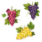 Photo Different varieties of grapes and glasses of wine