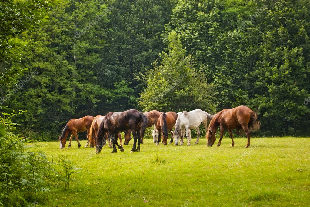 horses in forest clearing