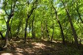 Fényképek Zöld erdő