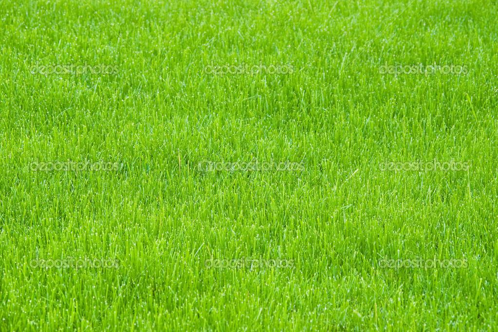 Sfondo Verde Erba Foto Stock Mishoo 47664563