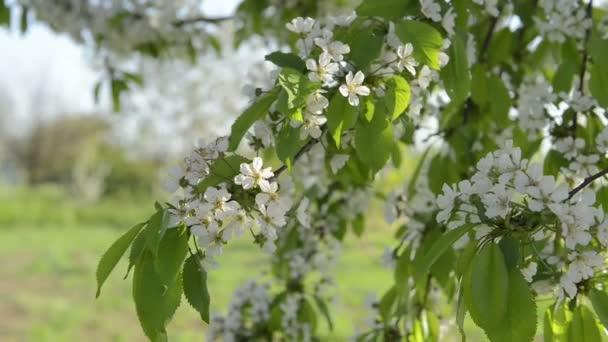 Petal flowers blooming in spring
