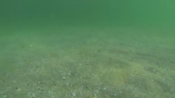 Diving under water with a camera