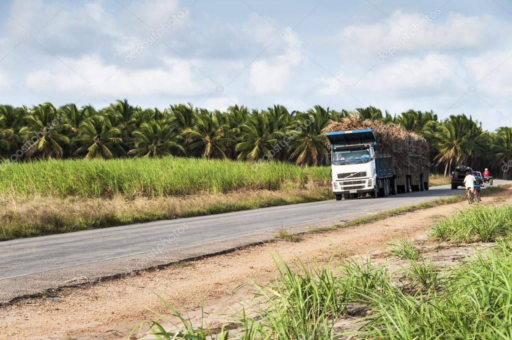 Trucks for transport of sugarcane