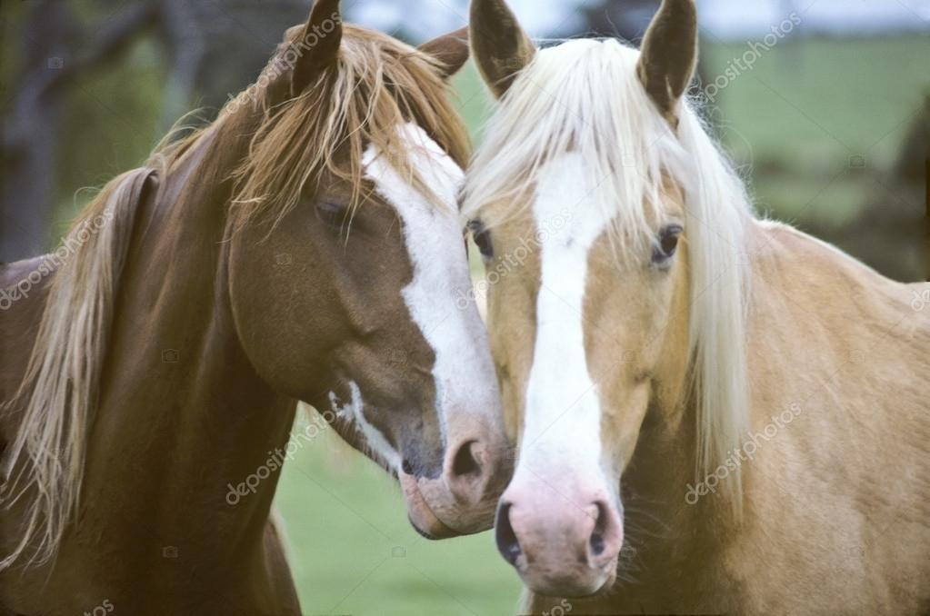 Best Lovers of the Mane Kind