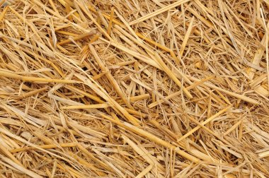 Straw background texture