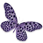 fekete és lila pillangó