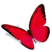 piros pillangó
